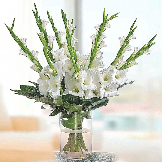 White gladiolus flowers white gladiolus mightylinksfo